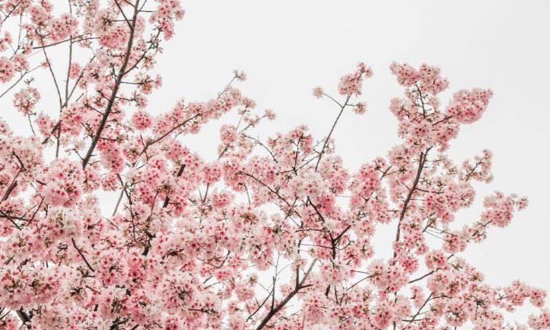 Afecțiuni de primăvară
