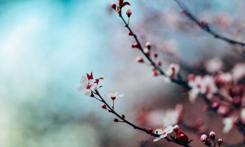 Trecerea de la iarnă la primăvară